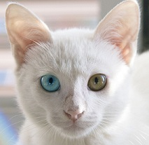La génétique des chats et des chiens démystifiée