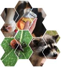 SPV6400A Introduction à la santé publique vétérinaire - Notions générales d'infectiologie