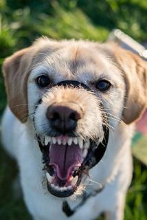 Évaluation de la dangerosité du chien mordeur
