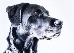 Approche clinique et traitements des cas de comportement chez le chien