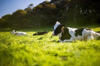 Les AINS chez les animaux d'élevage  - Conférence Web (en anglais)