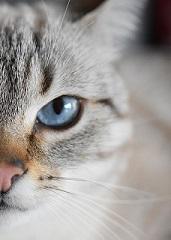Le diable est dans les détails : Trucs et astuces autour de l'euthanasie pour assurer le bien-être de l'animal, de sa famille et de son équipe vétérinaire