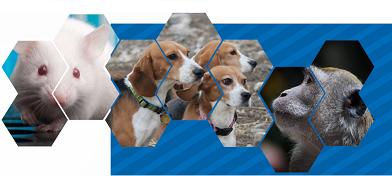 Certification en médecine des animaux de laboratoire