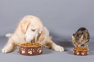 L'ABC de la nutrition - atelier pratique: Quand l'appétit va, tout va... mais quand ça ne va pas?