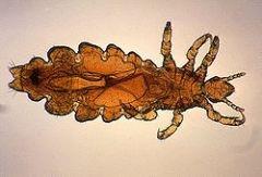 Zoonoses parasitaires - Animaux de compagnie